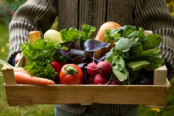 Man holds vegetables in a box on background of garden.. Carrots, lettuce, basil, pumpkin, zucchini, eggplant, bell peppers and radishes in a wooden box. Farmer has collected vegetables. harvesting.