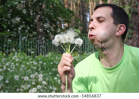 Man in a green sport shirt blows on dandelions, inflating cheeks