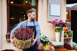 Man in apron holding basket with vibrant pink common heather (Calluna vulgaris), looking away over window, storefront of flower shop, outdoor. Autumn sale and small business concept.