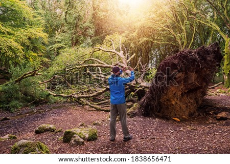 Man in blue jacket taking picture of a giant fallen tree in a park on his smart phone. Barna woods, Galway city, Ireland. Concept nature disaster, storm and hurricane devastating effects Stock fotó ©