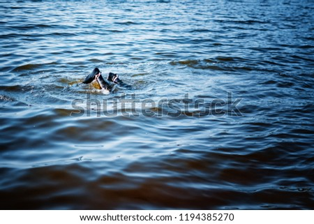 man in flippers and diving suit dives into the water #1194385270