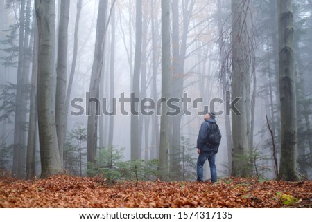 Man in the mysterious dark beech forest in fog. Autumn morning in the misty woods. Magical foggy atmosphere. Landscape photography