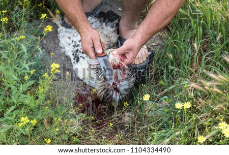 man is cutting a head of a rooster as a sacrifice to God #1104334490