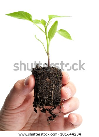 Man is holding young plant that grows in a lump of soil, isolated on a white background.