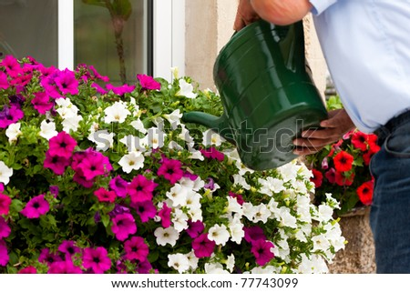 Man is watering flowers in front of a window
