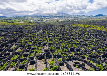 Man-made landscape of the Pico Island Vineyard Culture, Azores, Portugal. Pattern of spaced-out, long linear walls running inland from, and parallel to, the rocky shore with Pico volcano in background Foto stock ©