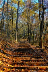 Man-made wooden stair path leading into an autumn forest nature walk outside of Fond du Lac, Wisconsin