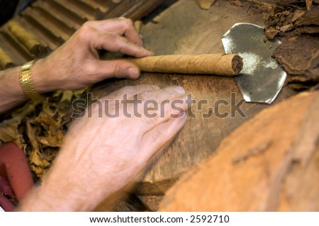 man making holding handmade freshly rolled cigars dominican republic tobacco