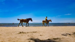 Man on horseback leading another brown horse on the beach in the Fiji Islands against the blue sky