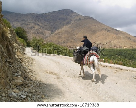 Man on the mule, transportation backpack. Atlas mountain, Morocco