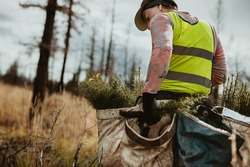 Man planting trees in forest. Male tree planter wearing reflective vest walking in forest carrying bag full of trees.