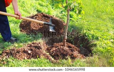 Man plants a small tree, hands holds shovel digs the ground, nature, environment and ecology concept #1046165998