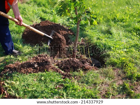 Man plants a tree, hands with shovel digs the ground, nature, environment and ecology concept #214337929