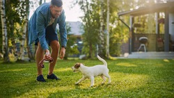 Man Plays with His Smooth Fox Terrier Dog Outdoors. He Pets and Teases His Puppy with His Favourite Toy. Idyllic Summer House.