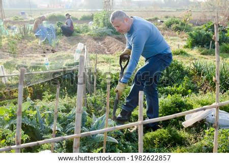 Man professional gardener using mattock at land with turnip in garden outdoor Stock photo ©