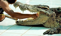 Man puts his hand into the mouth of the crocodile