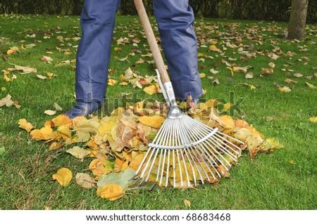 Man raking leaves in the garden