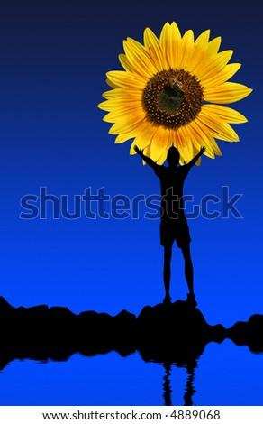 Man reaching for sunflower