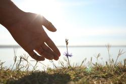 Man reaching hand to blooming flower outdoors, closeup. Nature healing power
