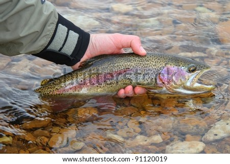 Man releasing rainbow trout fish fly fishing
