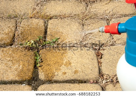 Man removes weeds from the sidewalk / cutting out weeds #688182253