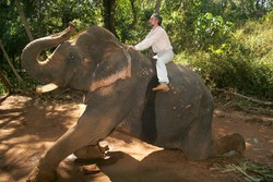 man ride in jungles on an elephant