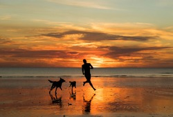 Man running with two dogs on the beach during sunset