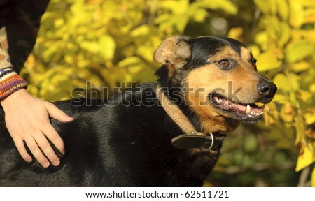 Man's hand and a dog on a yellow natural background