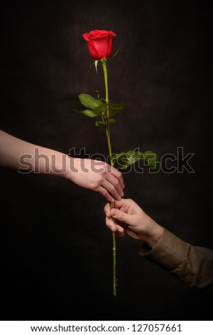 man's hand giving a rose to a woman