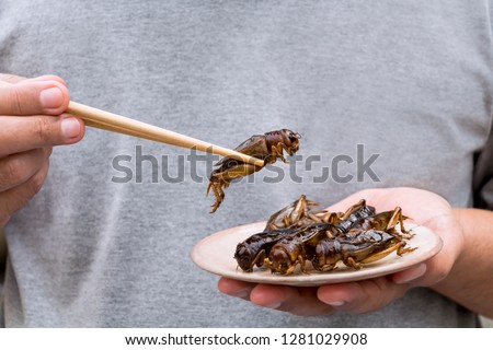 Photo of  Man's hand holding chopsticks eating Crickets insect on plate. Food Insects for eat as food items, it is good source of meal high protein edible for future food concept.