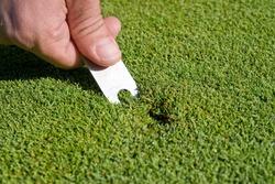 Man's hand repairs divot on golf green. Horizontally framed photo.