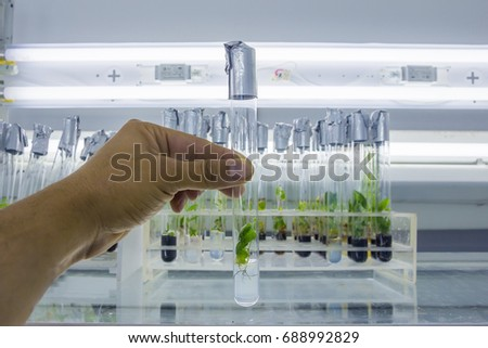 Shutterstock Man's hand with a test tube closed by aluminum foil with in vitro cloned microplant in a nutrient medium on background with stand of test tubes with microplants
