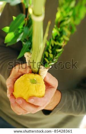 Man's hands holding the Lulav and Etrog, symbols of the Jewish festival of Sukkot