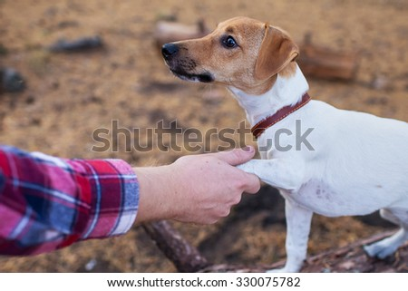 man shakes paw dog jack russell terrier