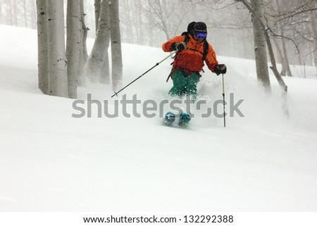 Man skiing powder snow through an aspen forest, Utah, USA.