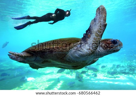 Man snorkeling dive with Green sea turtle in the Great Barrier Reef  in Queensland Australia. #680566462
