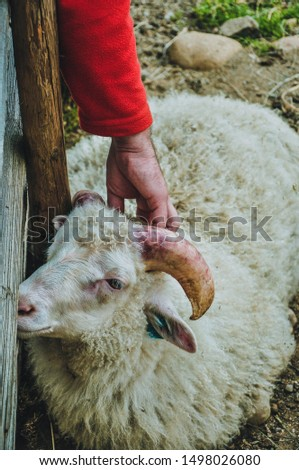 Man stroking a sheep in a nature reserve, Norway #1498026080