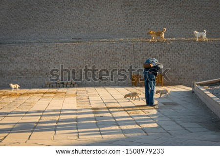 Man stroking cats at the entrance of the temple of Edfu. Egypt #1508979233