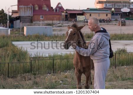 man stroking foal #1201307404