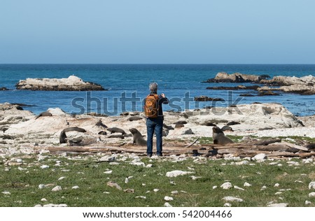 Man takes picture of seal on ocean shore, New Zealand