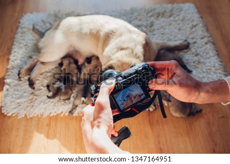 Man taking pictures of pug dog feeding six puppies at home. Master using camera to film footage of pet