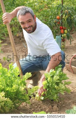 Man tending to his garden