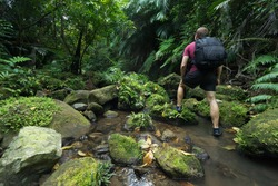 Man trekking through untouched tropical Jungle stream deep in the Rain Forest of Iriomote-jima, Okinawa, Japan
