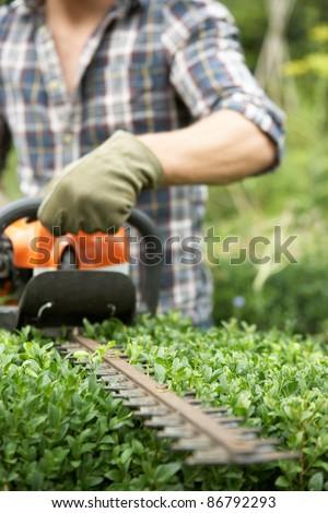 Man trimming hedge - stock photo