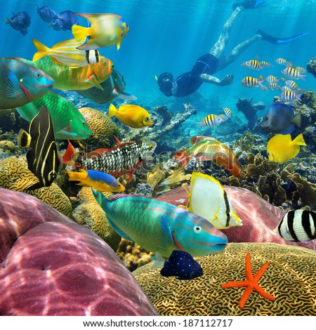 Beautiful Colorful Coral Reefs And Fish a colorful coral reef with
