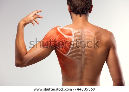 Man view from back. Blades, shoulder and trapezoid illustration. #744805369