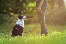 Man walk with young border collie dog