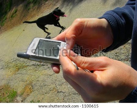 "Man walking dog receives ""pick up Dog Food"" Blackberry message."