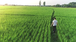 Man walking in a Meadow. Man from the back on a long country path. Green field in the summer, Farmer walking through a green  field on morning day, Young man walking in the field, alone.