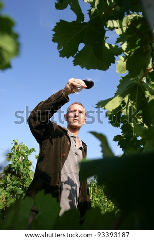 man walking in a vineyard and testing wine